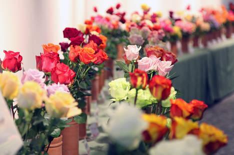 Roses anima su VI Feria de la Rosa con una veintena de espectáculos
