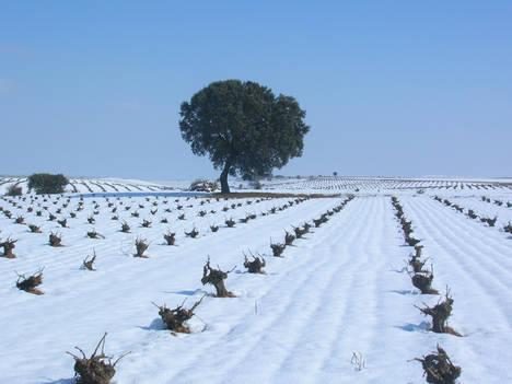 El espíritu navideño invade la Ruta del Vino de Rueda