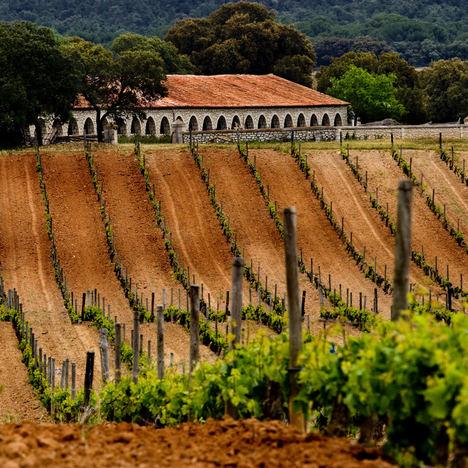 La Ruta del Vino Ribera del Duero reabre con todas las medidas de seguridad necesarias para acoger de nuevo a los turistas