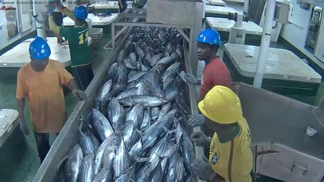 Opagac contribuye a mejorar la gestión de pesquería de atún tropical en el índico dentro del programa Common Oceans-ABNJ
