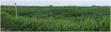 Se constituye el Grupo Operativo supra-autonómico Cereal-Agua, enfocado a un cultivo del cereal más rentable, sostenible y saludable