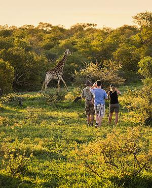 Turismo de Sudáfrica presenta nuevas rutas y productos en Fitur 2020