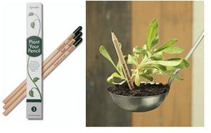 Sprout, el lápiz sostenible que se convierte en planta y que ha vendido 10 millones por todo el mundo