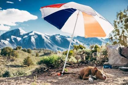 Tips para cuidar de tu perro en verano