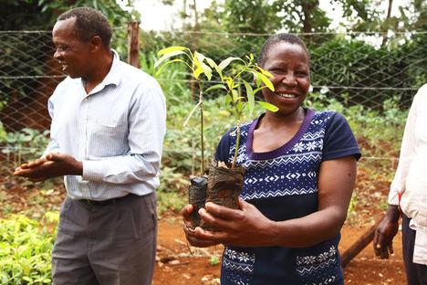 Plantar un árbol con un clic es posible gracias a Treedom