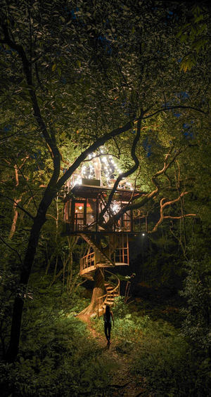 Lo último en astroturismo en Japón: observar las estrellas desde lo alto de la copa de un árbol