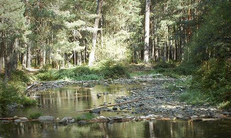 Tres bosques certificados FSC permitirán mejorar la adaptación de los montes españoles al cambio climático