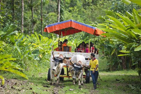 Costa Rica celebra en el mes de marzo el Día Nacional del Boyero
