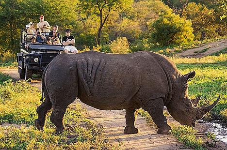Turismo de Sudáfrica, con la protección animal