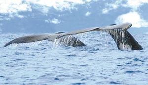 Costa Rica celebra la XI Edición del Festival de Ballenas y Delfines