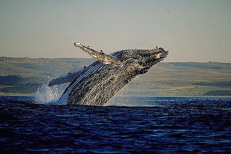 La Ruta de las ballenas del Cabo, un viaje por la costa sur de Sudáfrica