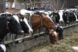 Unión de Uniones lanza su propuesta para limitar la proliferación de macrogranjas de leche