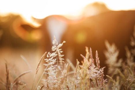 Unión de Uniones destaca el compromiso del sector agrario con el medio ambiente con la reducción de un 1,6% las emisiones GEI en 2019