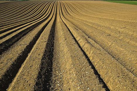 Unión de Uniones pide revisar los derechos sobre variedades vegetales y eliminar la prisión para usos no comerciales