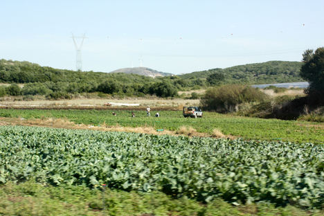 Unión de Uniones reclama incluir al sector agrario en el fondo de 11.000 millones de euros de ayudas a la solvencia empresarial
