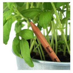 ¿Vuelta al cole eco friendly? Planta estos lápices después de su uso