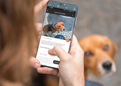 Welppy la app que ayuda a localizar mascotas perdidas