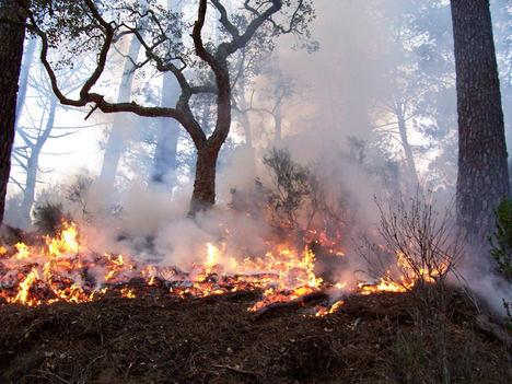 GMV organizará cinco demostraciones para consolidar una estrategia europea de gestión integrada de grandes incendios forestales