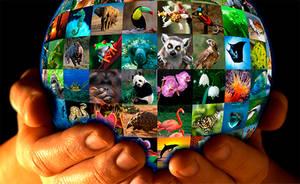 Angola defiende la prohibición de comerciar con especies en peligro de extinción