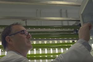 Bioeconomía: Del tratamiento de aguas residuales con microalgas a las biorrefinerías