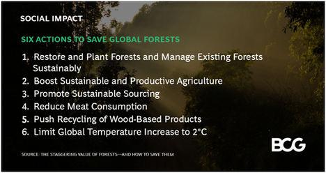 Los bosques del mundo están valorados en 150 B $, pero hay que actuar con rapidez y firmeza para evitar una pérdida de valor del 30% de aquí a 2050
