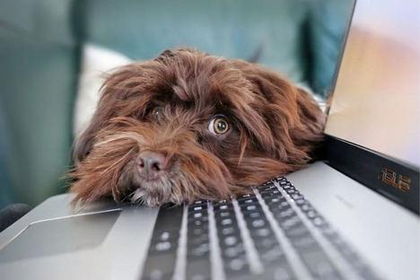 Los expertos advierten: abandonar mascotas en el confinamiento trae consecuencias legales
