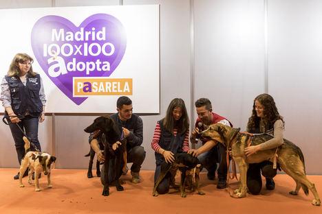 100x100 Mascota 2020 On Line, una salida para las mascotas abandonadas