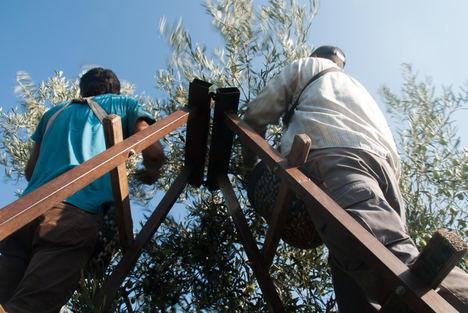 La Junta de Andalucía edita un folleto informativo con medidas para prevenir el COVID-19
