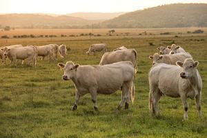 Unión de Uniones señala a varios europarlamentarios por el apoyo a favor de un drástico endurecimiento del uso de antibióticos en animales sólo por ideología y sin hacer caso al criterio veterinario