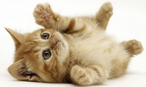Tener gato sale a cuenta. También en el seguro