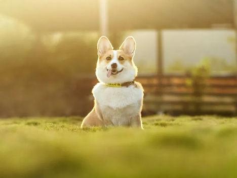 ¿Puede una mascota ser tu heredero?