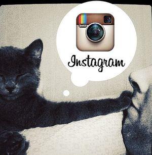 Consejos que te ayudarán a ganar dinero a través de Instagram