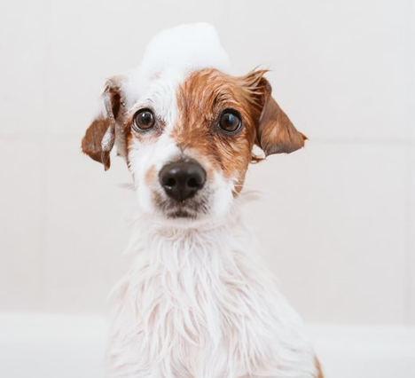 ¿Cómo prevenir contagios de COVID-19 en mascotas?