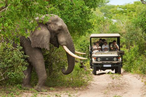 Cinco destinos para disfrutar del auténtico safari en Sudáfrica
