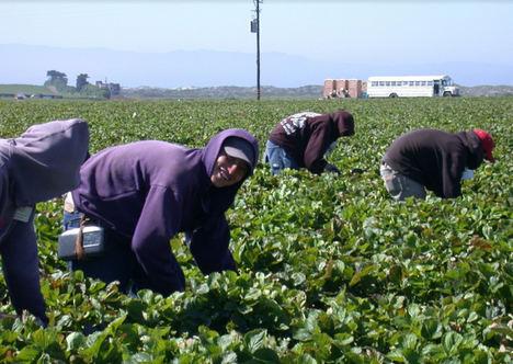 Unión de Uniones pide extremar precauciones para evitar contraer COVID-19 a los agricultores y sus trabajadores
