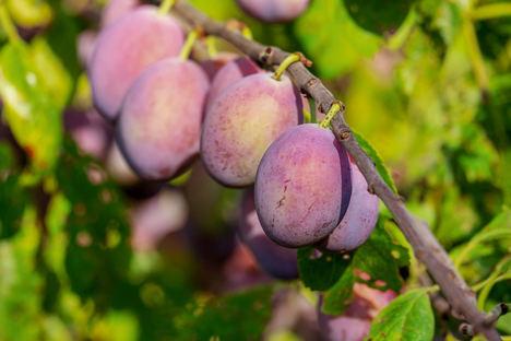 Unión de Uniones critica que no se cumple el principio de reciprocidad en los productos agrarios procedentes de terceros países