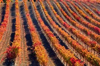 La vendimia sólo influye al alza en los precios hoteleros de La Rioja