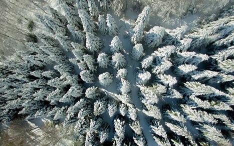 Willis Towers Watson resume los puntos clave de las coberturas de seguros por el temporal de nieve